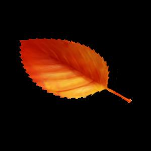 紅葉素材サムネイル
